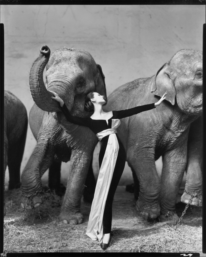 Dovima with elephants, Dior, Irving Penn