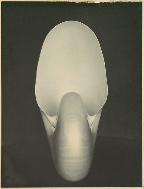 Edward Weston Nautilus